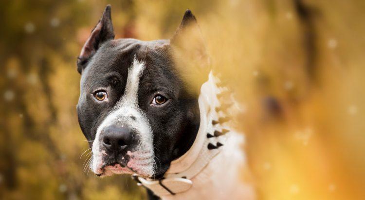Fotografia de Mascotas - Tango y Adri